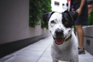 How to Safely Walk Your Puppy in A Big City?