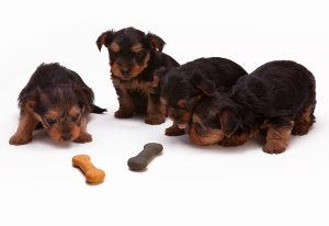 How to Make Sure Your Homemade Dog Food Delivers the Right Nutrients? – To Be a Canine Culinary Master