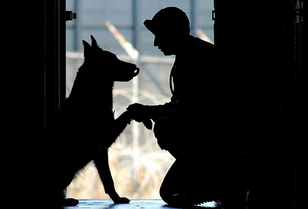 What To Do If A Service Dog Approaches You Alone?